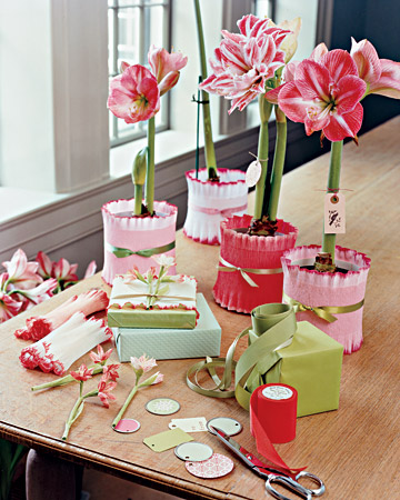 Amaryllis_table