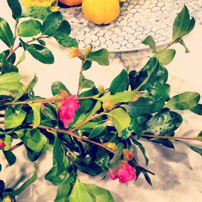 Camellia Blooms // BunnyCakes