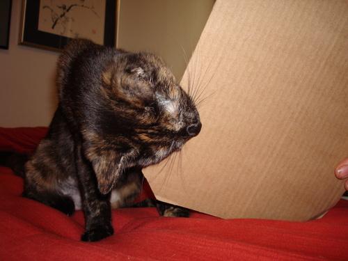 P Diddy loves cardboard